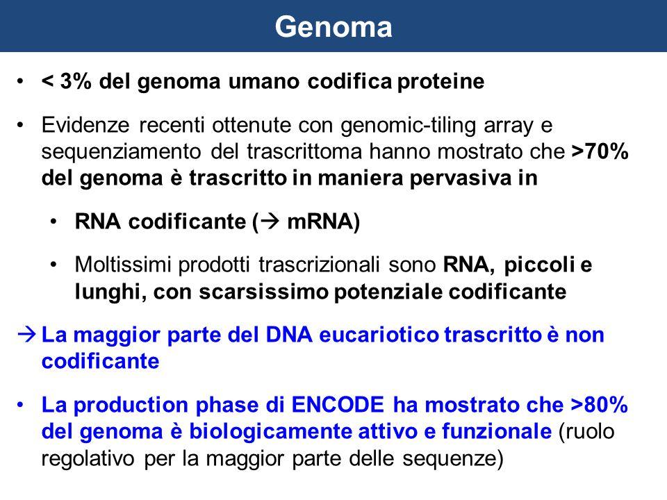 < 3% del genoma umano codifica proteine Evidenze recenti ottenute con genomic-tiling array e sequenziamento del trascrittoma hanno mostrato che >70% d