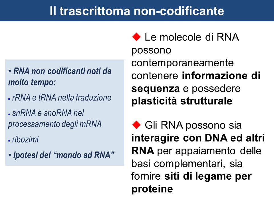  Le molecole di RNA possono contemporaneamente contenere informazione di sequenza e possedere plasticità strutturale  Gli RNA possono sia interagire