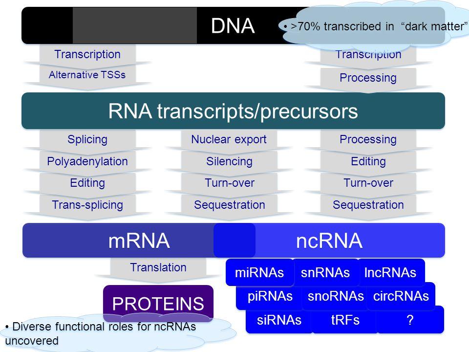 siRNAs tRFs ? ? Translation Alternative TSSs PROTEINS mRNA Trans-splicing Editing Polyadenylation Splicing Sequestration Turn-over Editing Processing