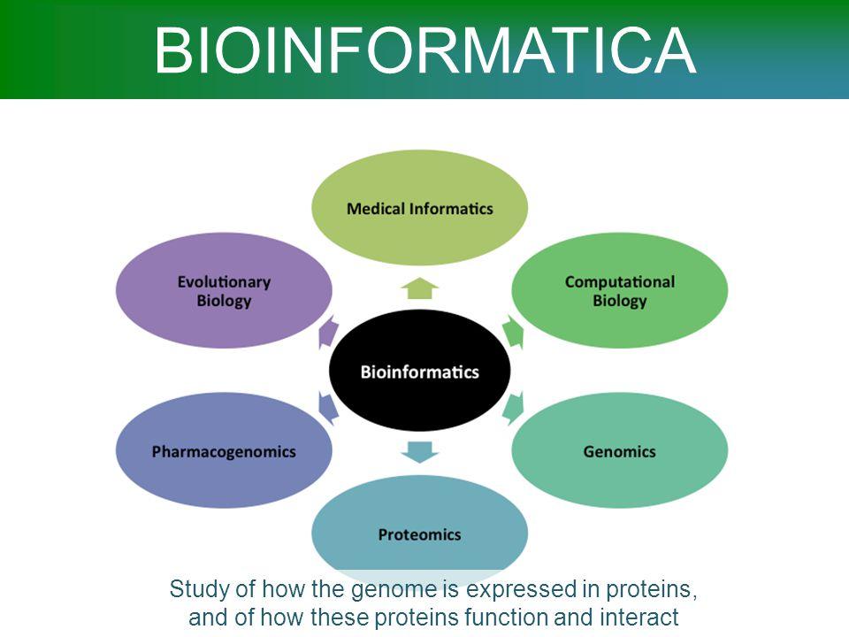Il ruolo della bioinfomatica Questi miliardi di sequenze presentano sfide e opportunità, per studiare moltissimi problemi biologici diversi, quali: Stati cellulari in relazione a ciclo cellulare, differenziamento, malattia ecc.