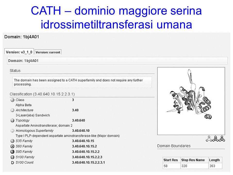 CATH – dominio maggiore serina idrossimetiltransferasi umana