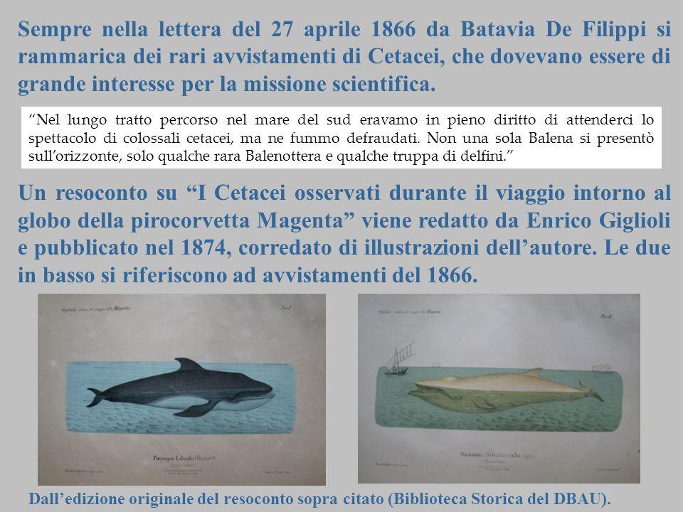 18 Sempre nella lettera del 27 aprile 1866 da Batavia De Filippi si rammarica dei rari avvistamenti di Cetacei, che dovevano essere di grande interess