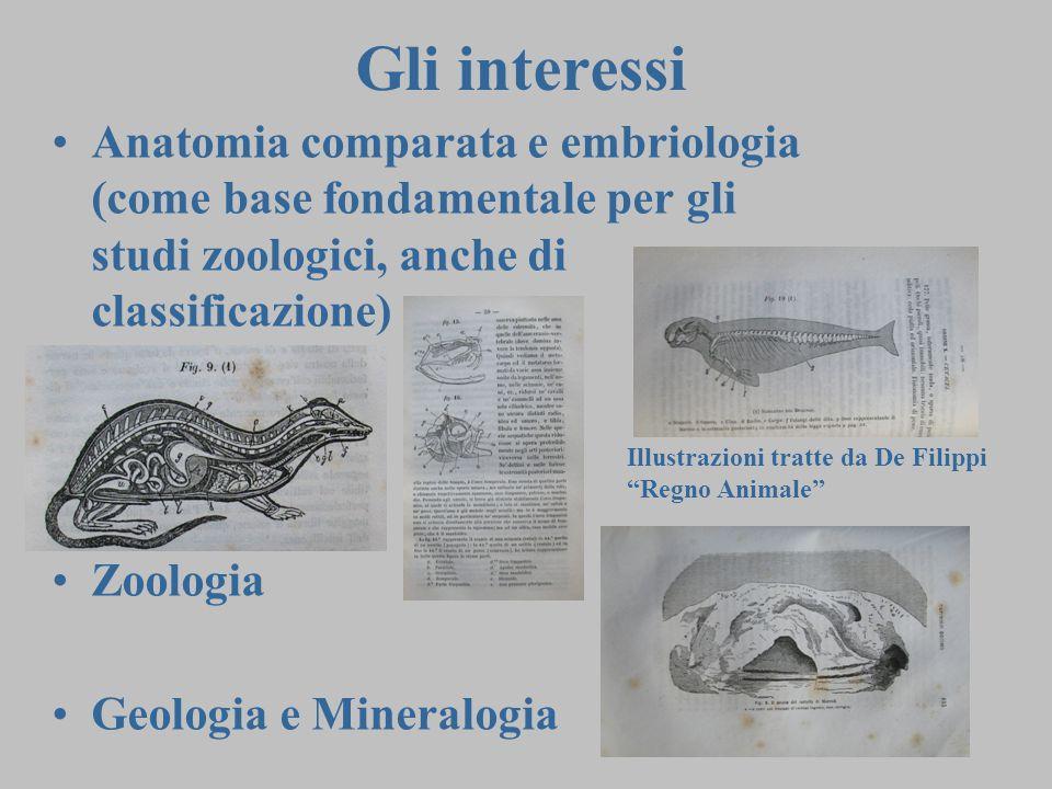 2 Anatomia comparata e embriologia (come base fondamentale per gli studi zoologici, anche di classificazione) Zoologia Geologia e Mineralogia Gli interessi Illustrazioni tratte da De Filippi Regno Animale