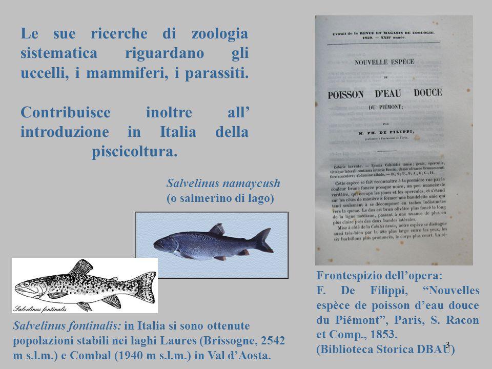 Le sue ricerche di zoologia sistematica riguardano gli uccelli, i mammiferi, i parassiti. Contribuisce inoltre all' introduzione in Italia della pisci