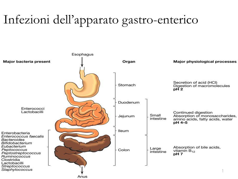 L'antigene somatico 0, di natura polisaccaridica, è identificabile con l endotossina la cui parte attiva, di natura lipidica (lipide A ), affonda nel corpo batterico ed è causa delle manifestazioni generali comuni a tutti i Gram-negativi quali febbre, leucopenia, attivazione della cascata del complemento, shock coagulazione intravascolare disseminata 22 Infezioni dell'apparato gastro-enterico Enterobacteriaceae - Morfologia e generalità