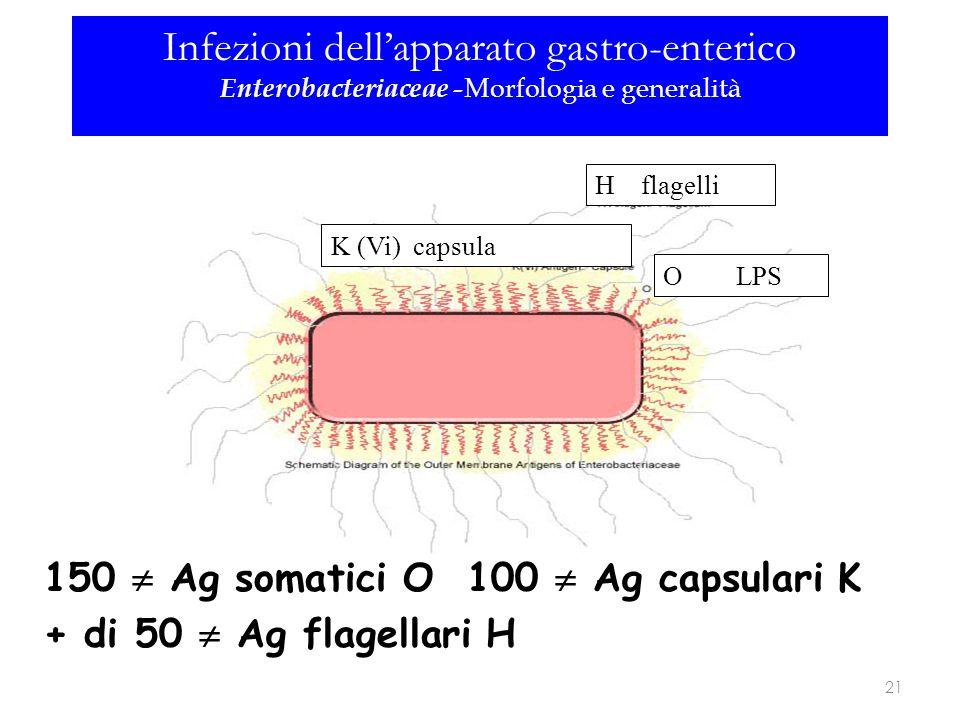 150  Ag somatici O 100  Ag capsulari K + di 50  Ag flagellari H H flagelli O LPS K (Vi) capsula 21 Infezioni dell'apparato gastro-enterico Enteroba