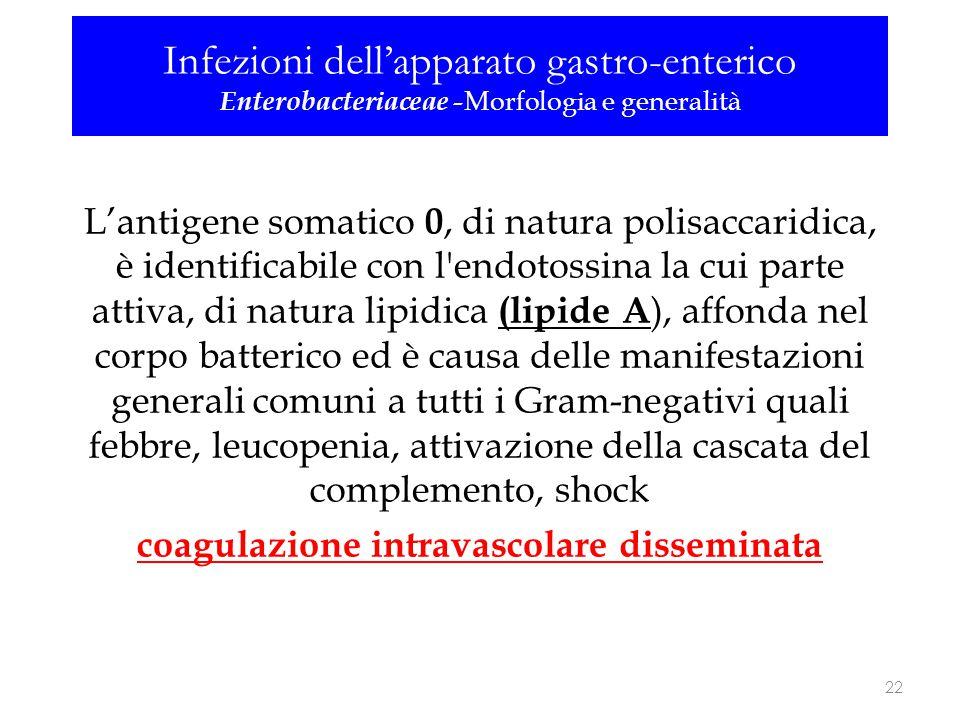 L'antigene somatico 0, di natura polisaccaridica, è identificabile con l'endotossina la cui parte attiva, di natura lipidica (lipide A ), affonda nel