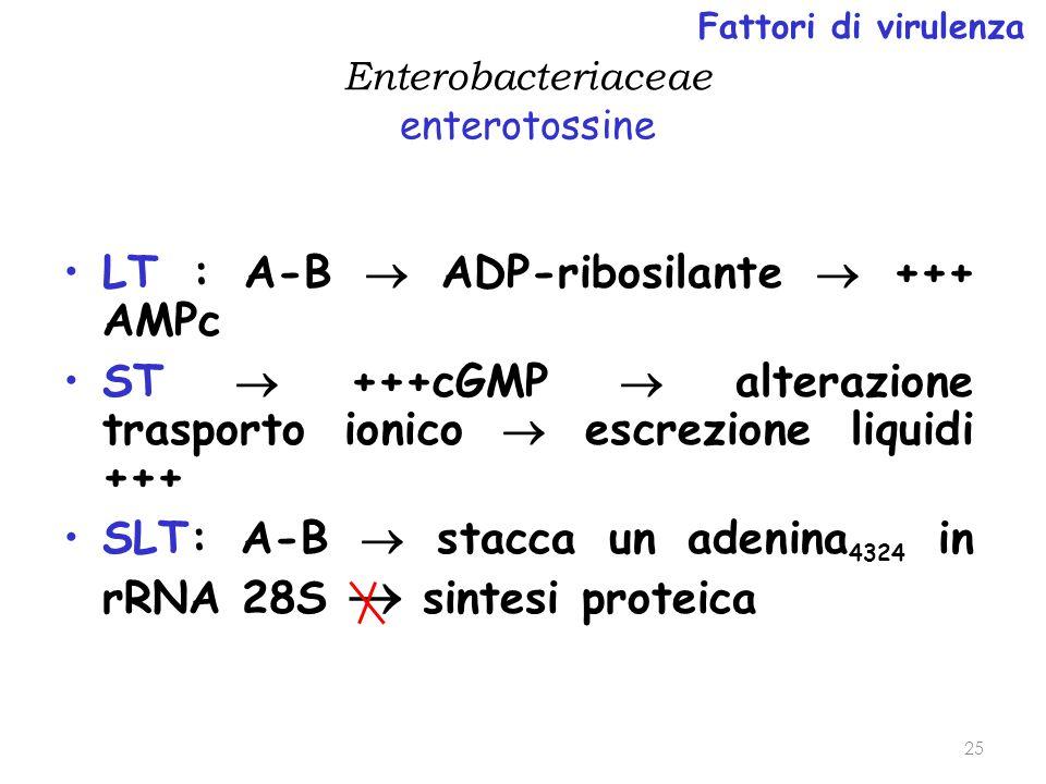 Enterobacteriaceae enterotossine LT : A-B  ADP-ribosilante  +++ AMPc ST  +++cGMP  alterazione trasporto ionico  escrezione liquidi +++ SLT: A-B 