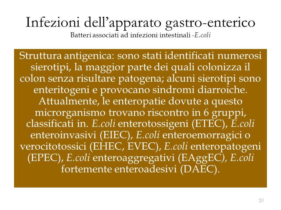 Infezioni dell'apparato gastro-enterico Batteri associati ad infezioni intestinali - E.coli Struttura antigenica: sono stati identificati numerosi sie