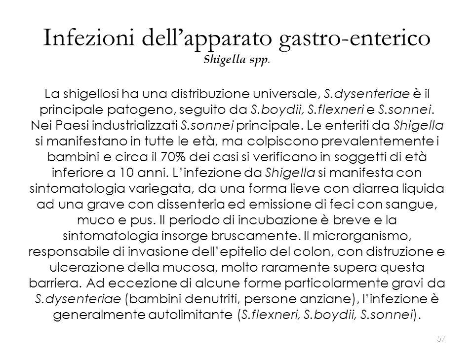 Infezioni dell'apparato gastro-enterico Shigella spp. La shigellosi ha una distribuzione universale, S.dysenteriae è il principale patogeno, seguito d
