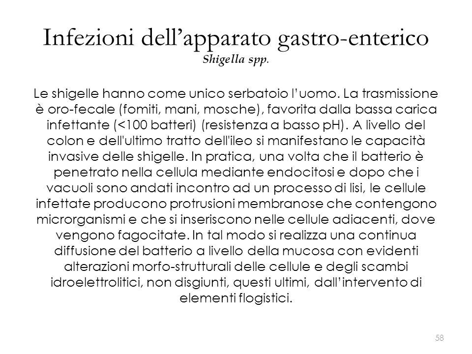Infezioni dell'apparato gastro-enterico Shigella spp. Le shigelle hanno come unico serbatoio l'uomo. La trasmissione è oro-fecale (fomiti, mani, mosch