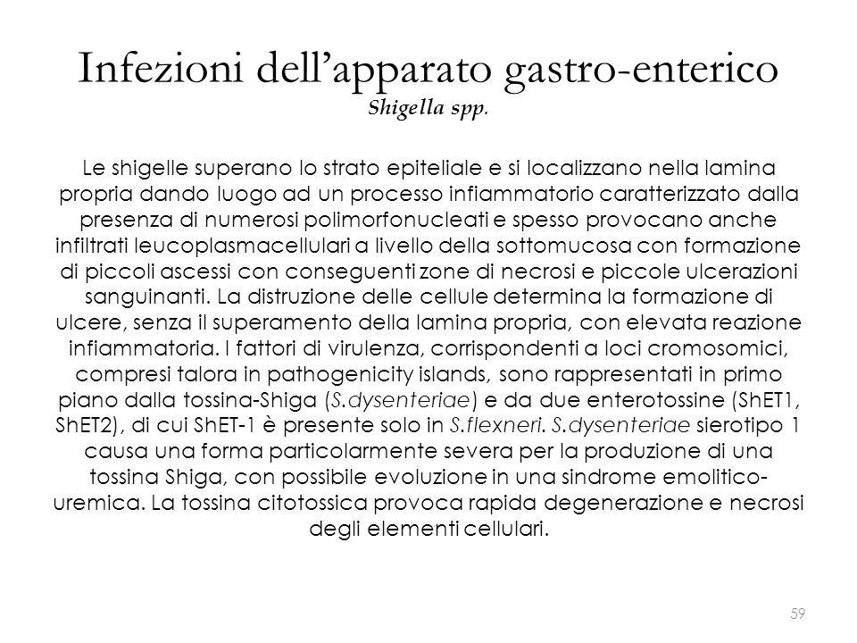 Infezioni dell'apparato gastro-enterico Shigella spp. Le shigelle superano lo strato epiteliale e si localizzano nella lamina propria dando luogo ad u