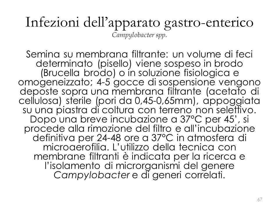 Infezioni dell'apparato gastro-enterico Campylobacter spp. Semina su membrana filtrante: un volume di feci determinato (pisello) viene sospeso in brod