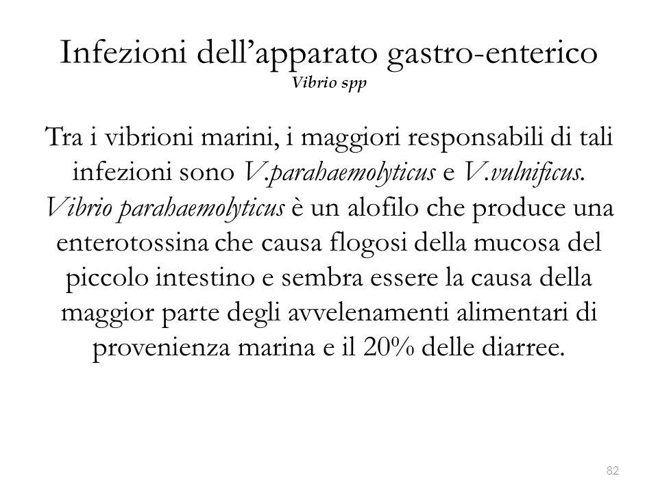 Infezioni dell'apparato gastro-enterico Vibrio spp Tra i vibrioni marini, i maggiori responsabili di tali infezioni sono V.parahaemolyticus e V.vulnif