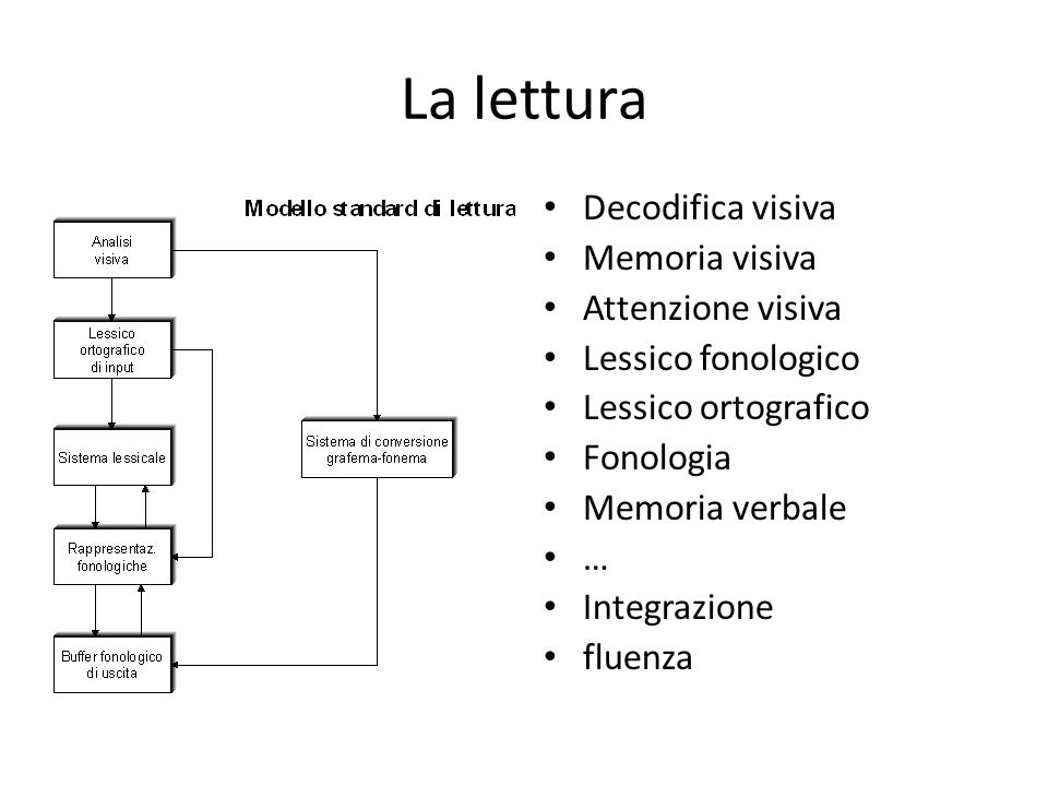 La lettura Decodifica visiva Memoria visiva Attenzione visiva Lessico fonologico Lessico ortografico Fonologia Memoria verbale … Integrazione fluenza