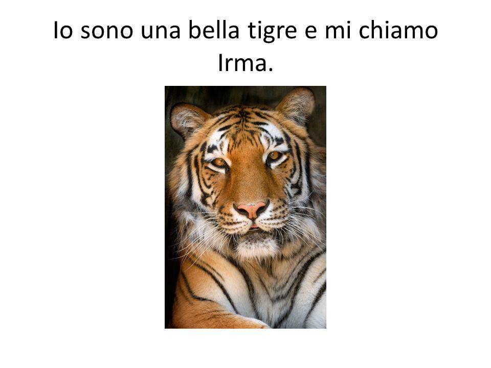 Io sono una bella tigre e mi chiamo Irma.