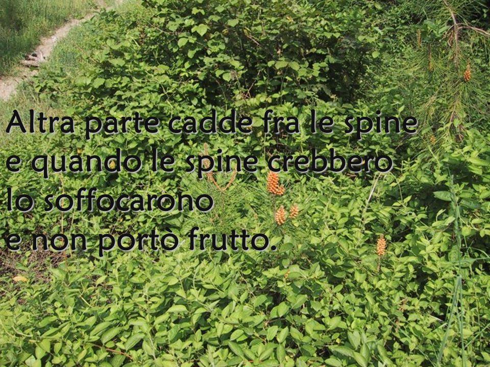 Altra parte cadde fra le spine e quando le spine crebbero lo soffocarono e non portò frutto.