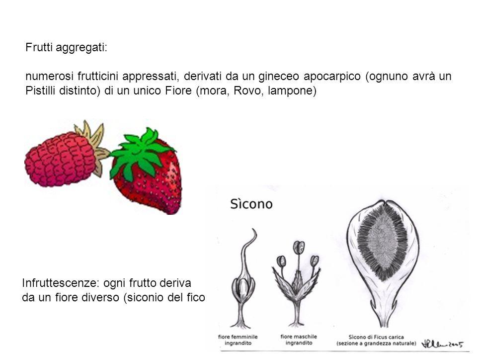 Frutti aggregati: numerosi frutticini appressati, derivati da un gineceo apocarpico (ognuno avrà un Pistilli distinto) di un unico Fiore (mora, Rovo,