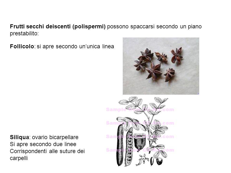 Frutti secchi deiscenti (polispermi) possono spaccarsi secondo un piano prestabilito: Follicolo: si apre secondo un'unica linea Siliqua: ovario bicarp