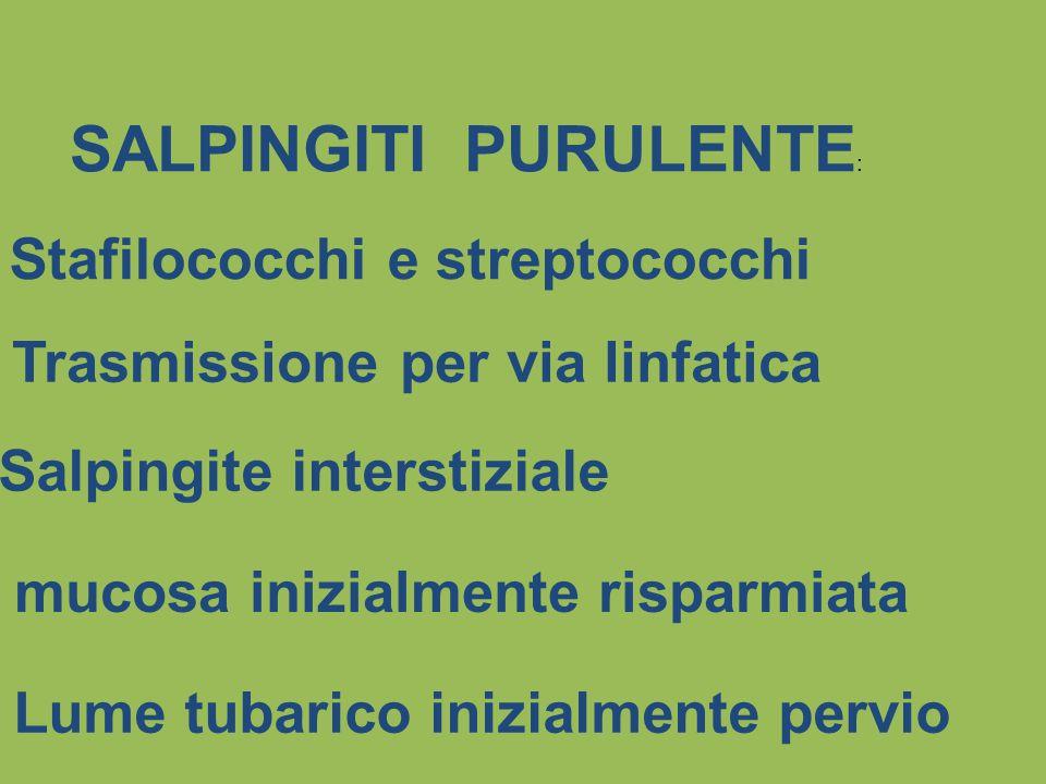SALPINGITI PURULENTE : Stafilococchi e streptococchi Salpingite interstiziale Trasmissione per via linfatica mucosa inizialmente risparmiata Lume tuba