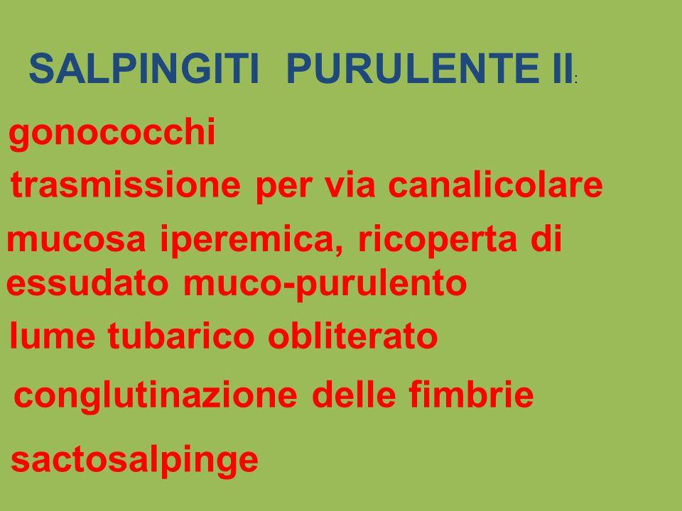 SALPINGITI PURULENTE II : gonococchi trasmissione per via canalicolare mucosa iperemica, ricoperta di essudato muco-purulento lume tubarico obliterato