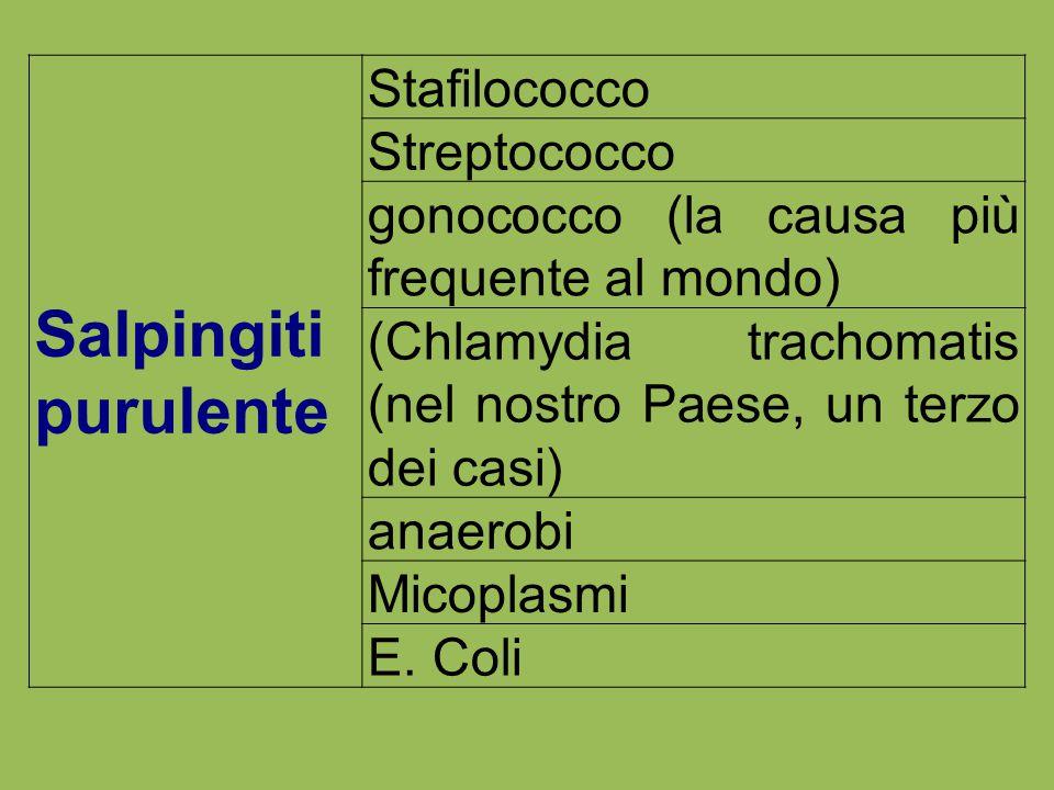 Salpingiti purulente Stafilococco Streptococco gonococco (la causa più frequente al mondo) (Chlamydia trachomatis (nel nostro Paese, un terzo dei casi