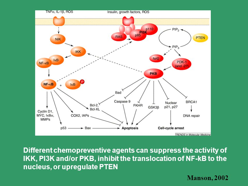 Different chemopreventive agents can suppress the activity of IKK, PI3K and/or PKB, inhibit the translocation of NF-kB to the nucleus, or upregulate PTEN Manson, 2002