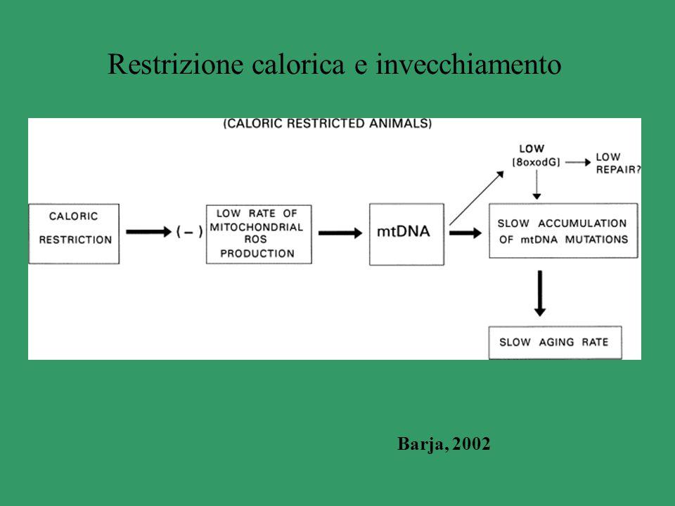 Restrizione calorica e invecchiamento Barja, 2002