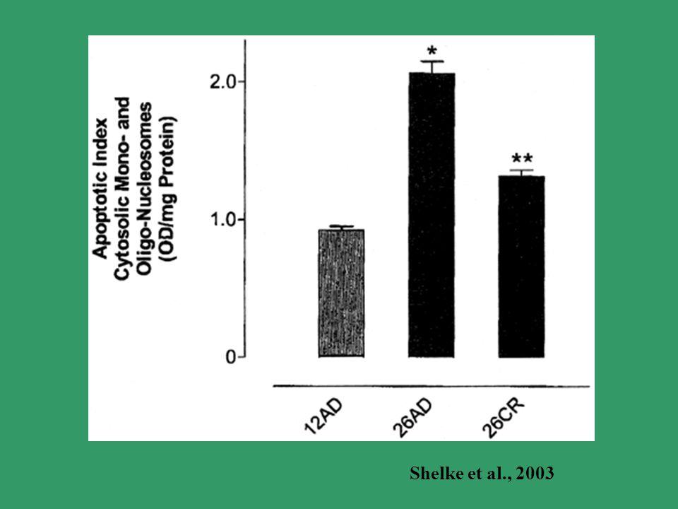 Shelke et al., 2003