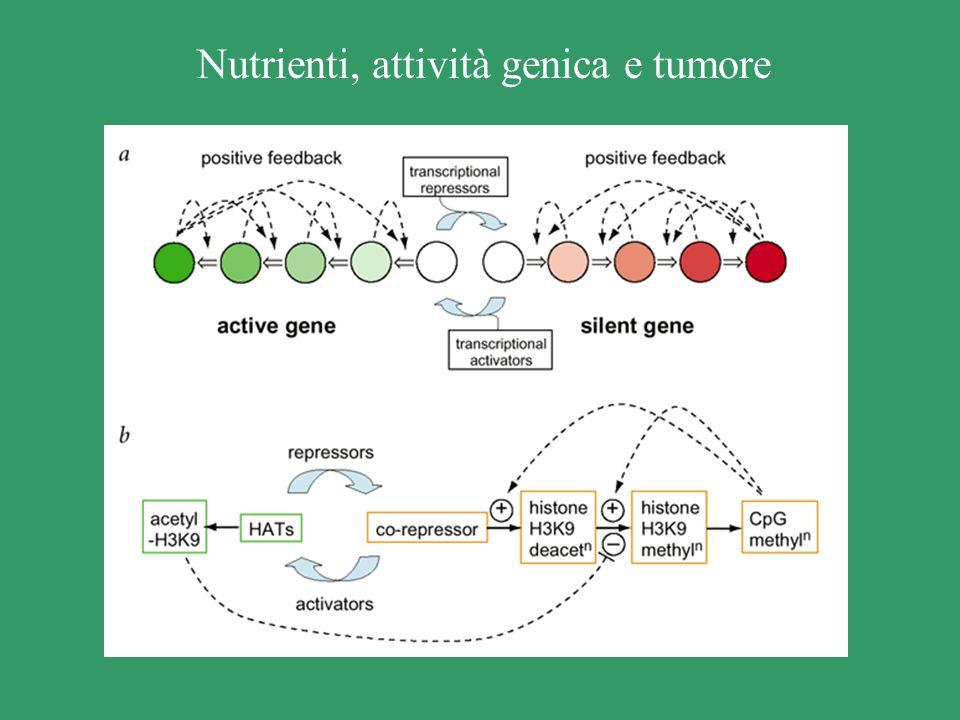 Nutrienti, attività genica e tumore