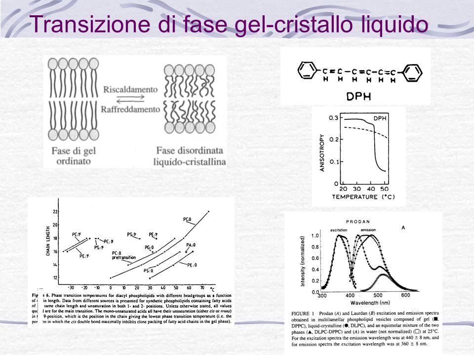 Transizione di fase gel-cristallo liquido
