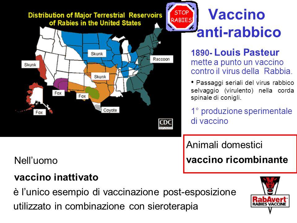 Vaccino anti-rabbico Nell'uomo vaccino inattivato è l'unico esempio di vaccinazione post-esposizione utilizzato in combinazione con sieroterapia 1890-
