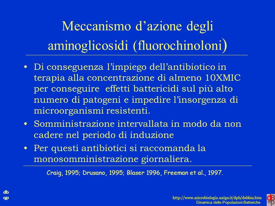 db qp Dinamica delle Popolazioni Batteriche http://www.microbiologia.unige.it/dpb/debbia.htm Meccanismo d'azione degli aminoglicosidi (fluorochinoloni