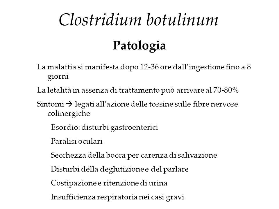 Clostridium botulinum Patologia La malattia si manifesta dopo 12-36 ore dall'ingestione fino a 8 giorni La letalità in assenza di trattamento può arri