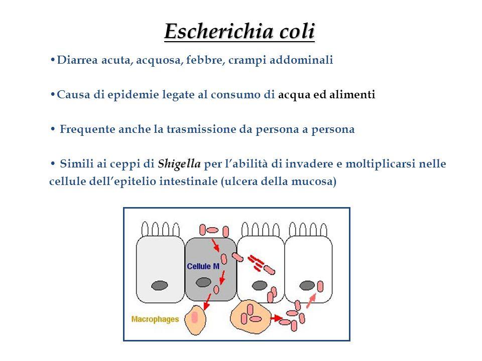 Escherichia coli Diarrea acuta, acquosa, febbre, crampi addominali Causa di epidemie legate al consumo di acqua ed alimenti Frequente anche la trasmis