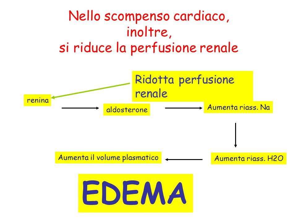 Nello scompenso cardiaco, inoltre, si riduce la perfusione renale EDEMA Ridotta perfusione renale renina aldosterone Aumenta riass. Na Aumenta riass.