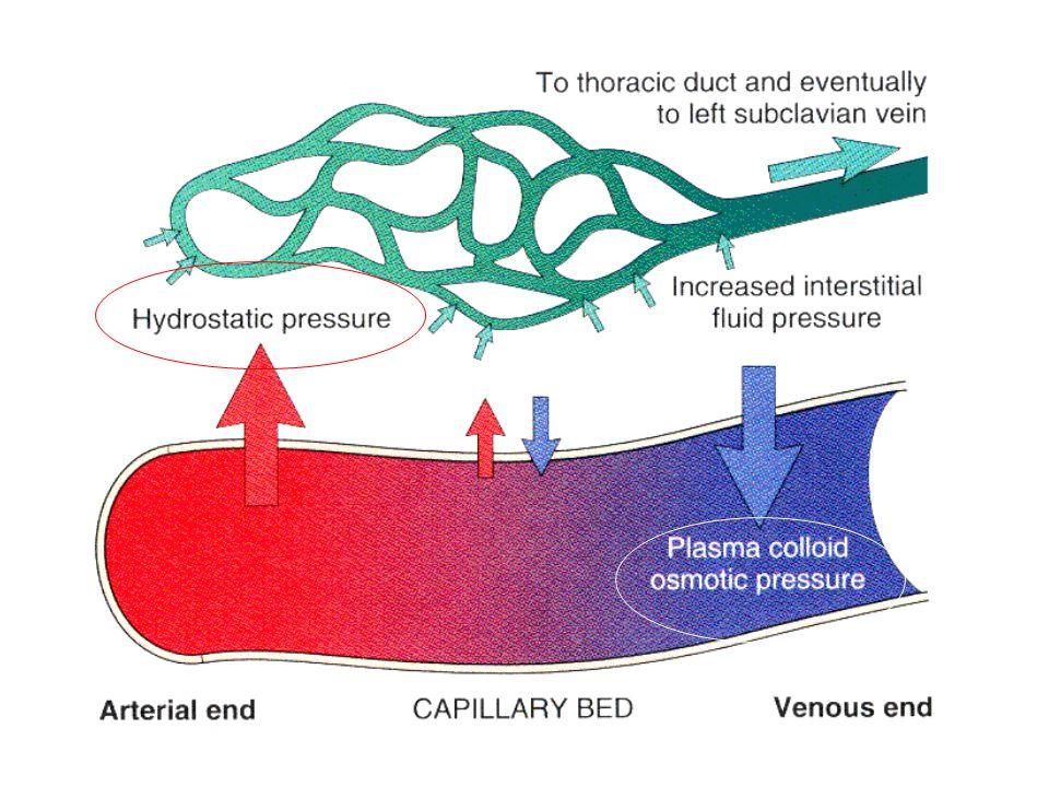 La PI tende a spingere il liquido fuori dal microcircolo nell'interstizio La PI del lato arterioso del capillare non dipende dalla pressione sistemica, ma è regolata dallo sfintere precapillare dell'arteriola La PI diminuisce mentre il sangue passa dall'estremità arteriosa a quella venosa del capillare
