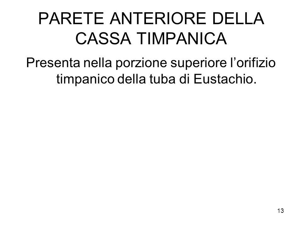 13 PARETE ANTERIORE DELLA CASSA TIMPANICA Presenta nella porzione superiore l'orifizio timpanico della tuba di Eustachio.