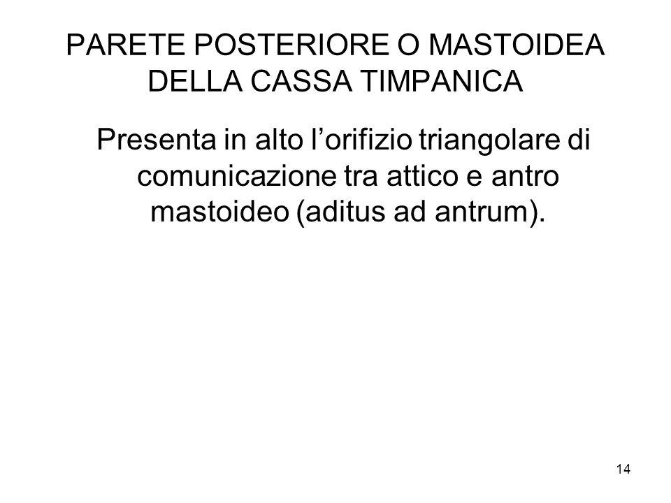 14 PARETE POSTERIORE O MASTOIDEA DELLA CASSA TIMPANICA Presenta in alto l'orifizio triangolare di comunicazione tra attico e antro mastoideo (aditus a