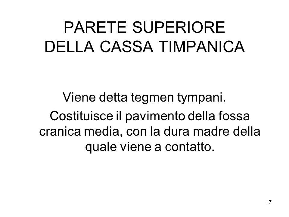 17 PARETE SUPERIORE DELLA CASSA TIMPANICA Viene detta tegmen tympani. Costituisce il pavimento della fossa cranica media, con la dura madre della qual