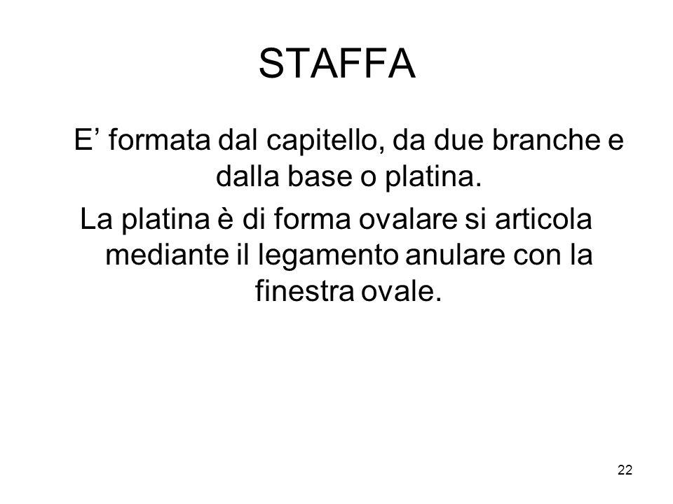 22 STAFFA E' formata dal capitello, da due branche e dalla base o platina. La platina è di forma ovalare si articola mediante il legamento anulare con