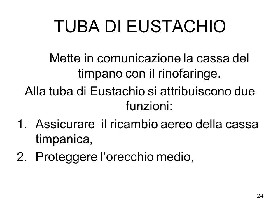 24 TUBA DI EUSTACHIO Mette in comunicazione la cassa del timpano con il rinofaringe. Alla tuba di Eustachio si attribuiscono due funzioni: 1.Assicurar