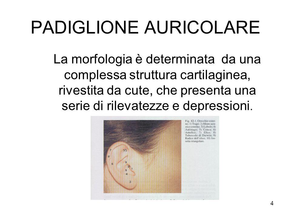 4 PADIGLIONE AURICOLARE La morfologia è determinata da una complessa struttura cartilaginea, rivestita da cute, che presenta una serie di rilevatezze