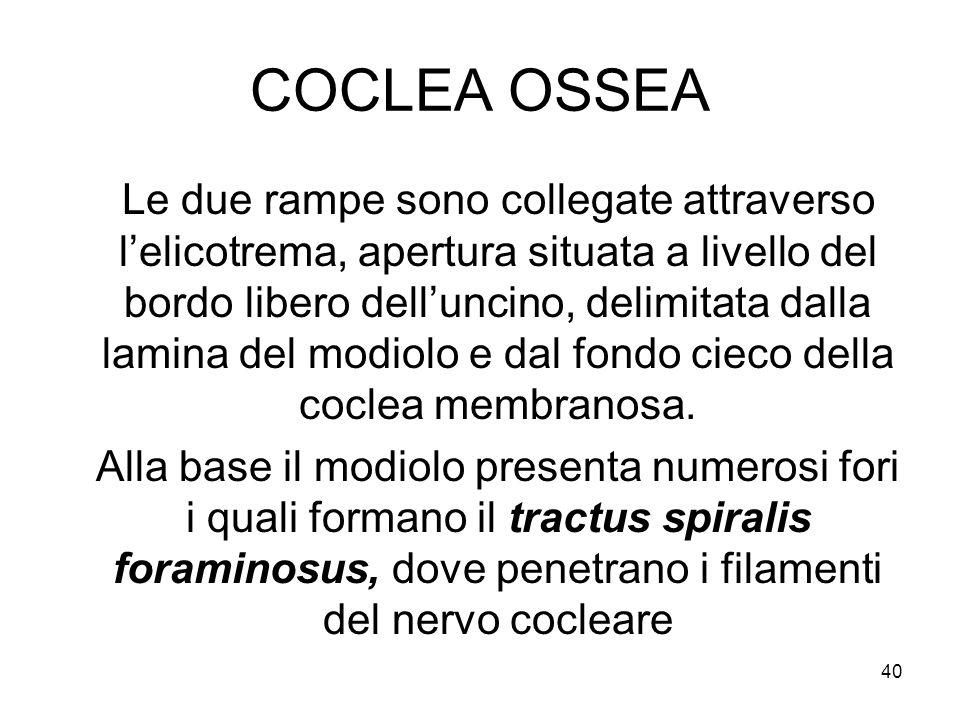 COCLEA OSSEA Le due rampe sono collegate attraverso l'elicotrema, apertura situata a livello del bordo libero dell'uncino, delimitata dalla lamina del