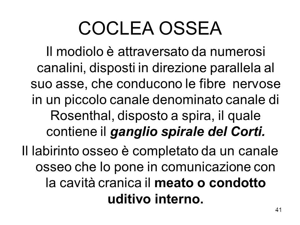 COCLEA OSSEA Il modiolo è attraversato da numerosi canalini, disposti in direzione parallela al suo asse, che conducono le fibre nervose in un piccolo