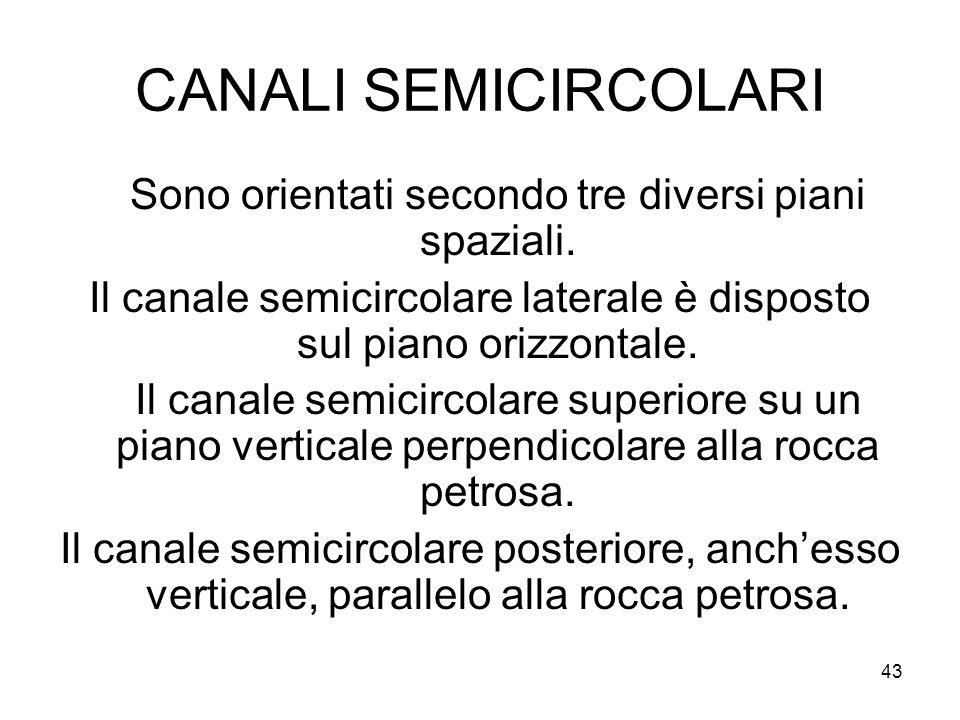 43 CANALI SEMICIRCOLARI Sono orientati secondo tre diversi piani spaziali. Il canale semicircolare laterale è disposto sul piano orizzontale. Il canal