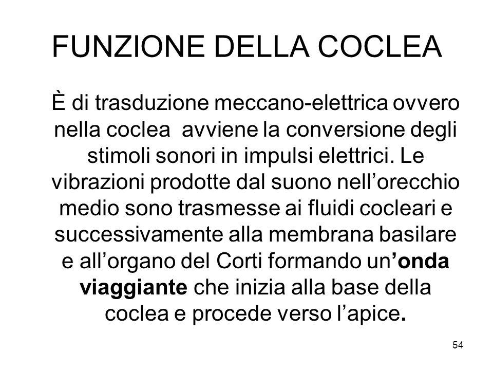 FUNZIONE DELLA COCLEA È di trasduzione meccano-elettrica ovvero nella coclea avviene la conversione degli stimoli sonori in impulsi elettrici. Le vibr