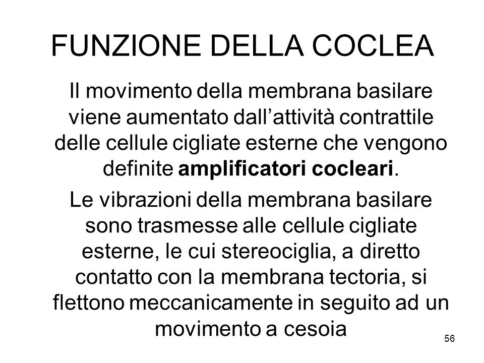 FUNZIONE DELLA COCLEA Il movimento della membrana basilare viene aumentato dall'attività contrattile delle cellule cigliate esterne che vengono defini