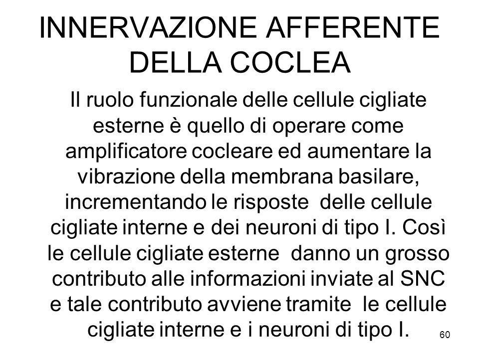 INNERVAZIONE AFFERENTE DELLA COCLEA Il ruolo funzionale delle cellule cigliate esterne è quello di operare come amplificatore cocleare ed aumentare la