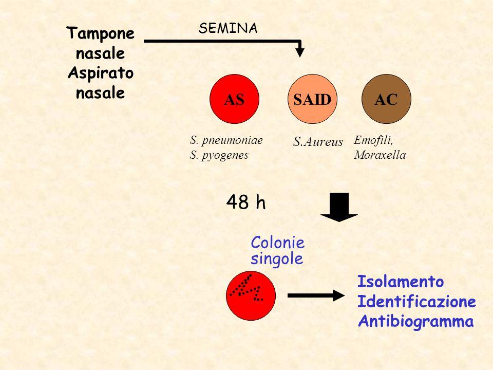 Tampone nasale Aspirato nasale ASACSAID 48 h SEMINA Colonie singole Isolamento Identificazione Antibiogramma S.Aureus S. pneumoniae S. pyogenes Emofil